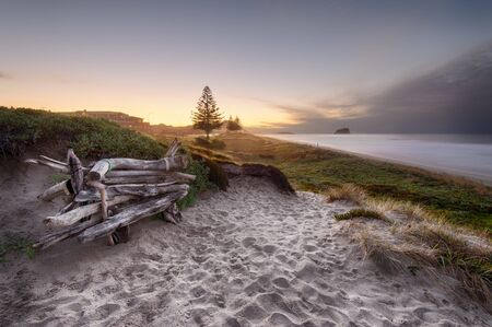 Driftwood bench seat on sand dunes overlooking Mount Maunganui Beach at sunset.