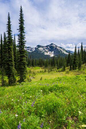 Wildflowers on Mount Revelstoke National Park, British Columbia, Canada