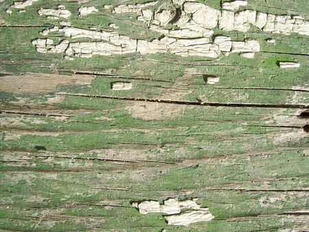 Old painted grunge  wooden wall. Background texture Stock Photo - 7560399