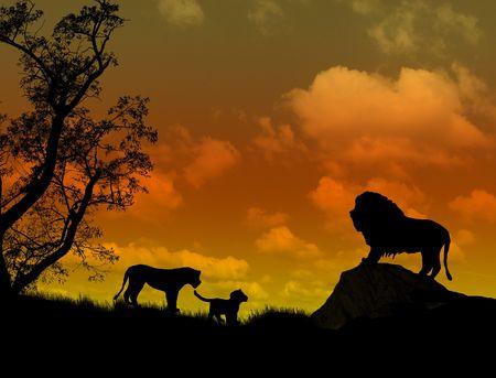 Lions on beautiful  sunset landscape . Background illustration illustration