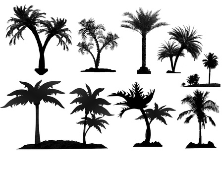 palm tree fruit: Palm tree silhouettes on white background, vector illustration Illustration
