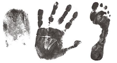 partes del cuerpo humano: Dedos, las manos y los pies imprimir aislado en blanco ilustración, vector Vectores