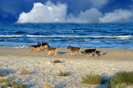 Dogs walking on beach Stock Photo - 13092534