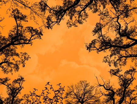 gloaming: Framework from the weaved branches of trees against orange sky at sunset Illustration