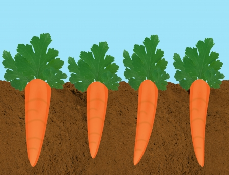 A cross-section of carrots growing in rich, dark soil Vector