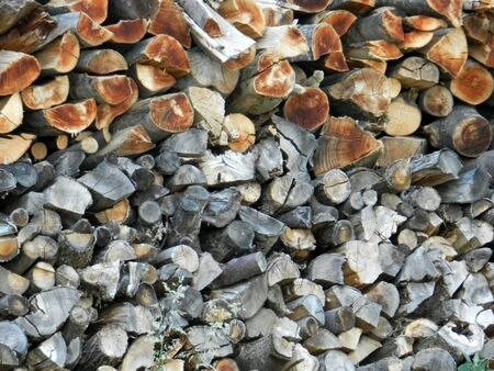 woodpile: Cut tree stumps background or texture