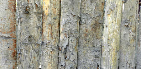 Natural grunge wooden board background vertical Stock Photo - 14838139