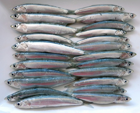 anchovy fish: Anchovy background Stock Photo