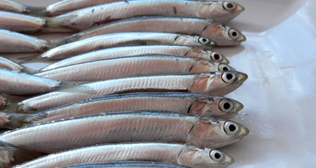 anchovy: Anchovy background Stock Photo