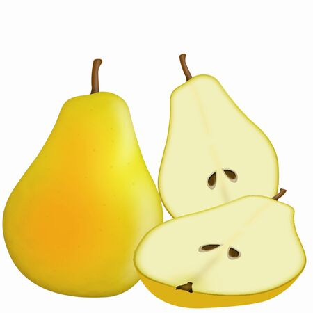 illustration of detailed yellow pear on white background