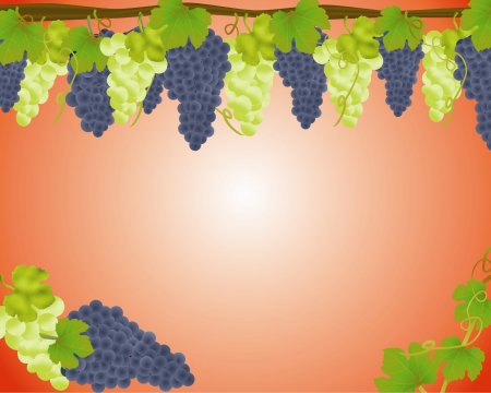 White and black grapes background, illustration Stock Vector - 16762313