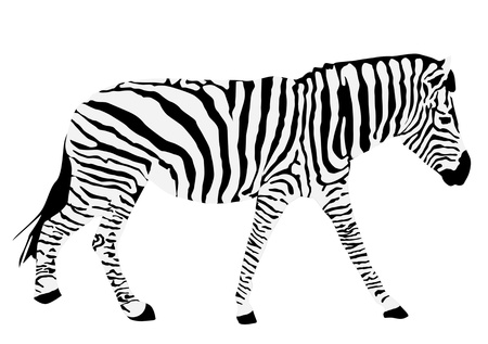 Animal illustration of  zebra silhouette Vector
