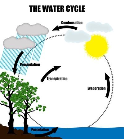 evaporacion: Representación esquemática del ciclo del agua en la naturaleza, ilustración vectorial (Ayuda para la Educación y Escuelas)