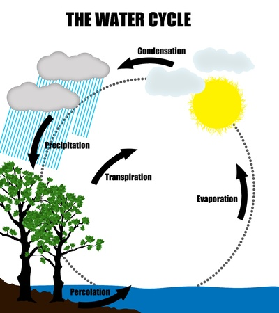 transpiration: Schematic representation of the water cycle in nature,vector illustration (Helpful for Education & Schools)