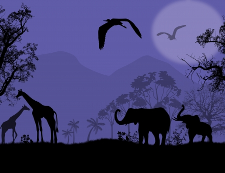 flora fauna: African wildlife at blue sunset, with elephants and giraffe