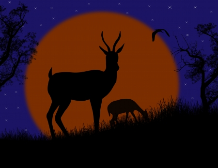 Gazelle couple in wild nature landscape at night, background illustration Stock Vector - 17590540