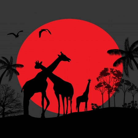 Giraffe family silhouettes in Africa wild nature landscape at night background,  vector illustration Stock Vector - 17697443