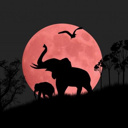 siluetas de elefantes: Silueta vista de los elefantes en la noche Vectores