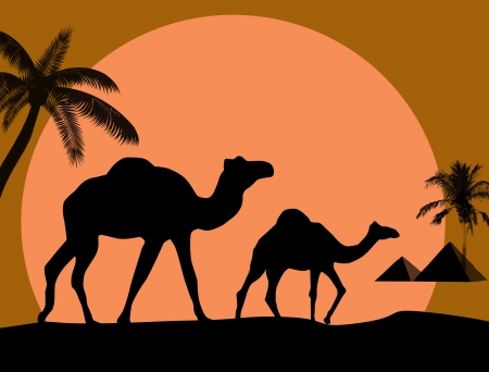 dune: Vector illustration of sunset in african desert with camel and palms