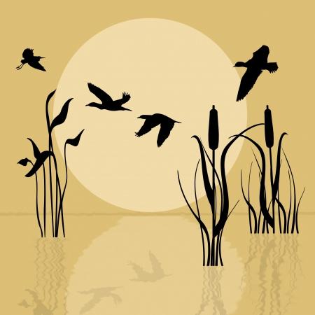 ocas: Silueta de los pájaros que vuelan sobre el lago al atardecer