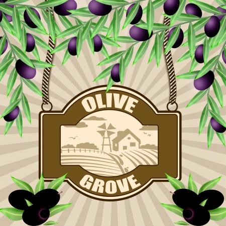 grove: Olive grove vintage retro poster, vector illustrator