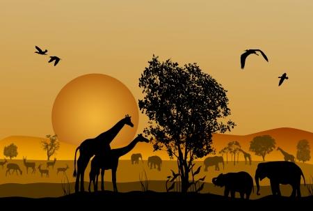of antelope: Silhouette of safari animal wildlife on beautiful sunset Illustration