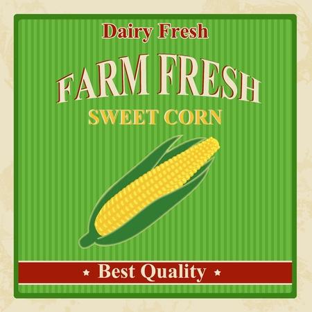 Vintage farm fresh sweet corn poster, illustration Vector