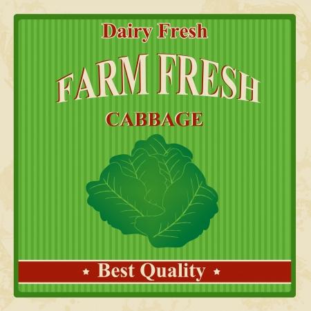 Vintage farm fresh cabbage poster,  illustration Vector