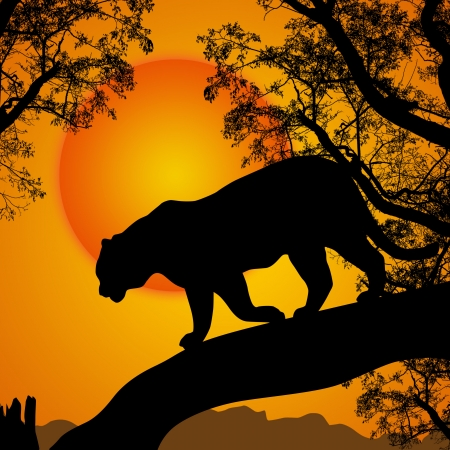 black panthers: Silhouette view of tiger on a tree at beautiful sunset, vector illustration