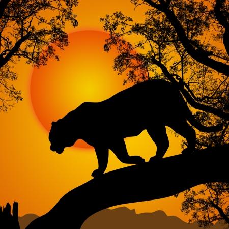 panthera: Silhouette vista della tigre su un albero al tramonto bello, illustrazione vettoriale