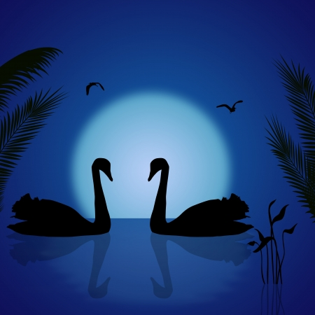 crescent lake: Two swans under the blue tropical sunset, illustration