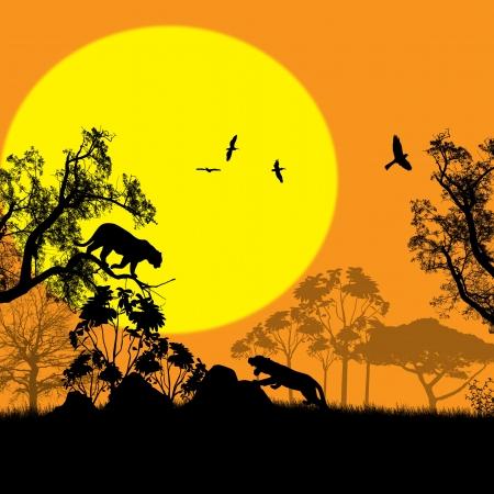 silueta tigre: Los gatos salvajes en el paisaje de la naturaleza salvaje en el atardecer, ilustración vectorial Vectores