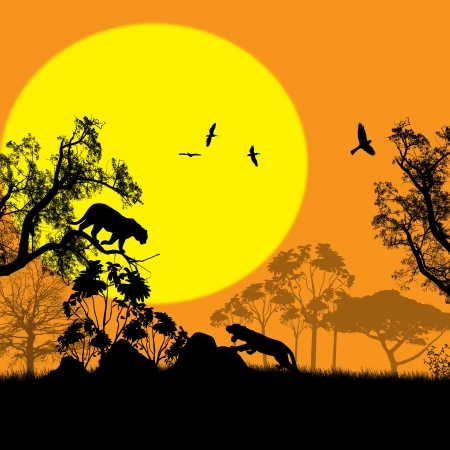 Sunset landscape vector: Mèo hoang trong cảnh quan thiên nhiên hoang dã vào lúc hoàng hôn, minh hoạ vector
