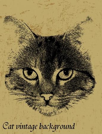 gato dibujo: Grunge fondo de la vendimia con el tema del gato, ilustración vectorial