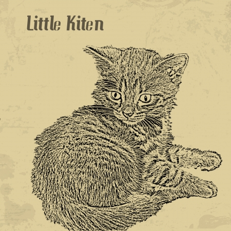 pussy: Grunge vintage background with little kiten theme, vector illustration