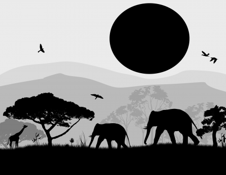 flora fauna: Wild elephants and giraffe at sunset on blac and white, vector illustration
