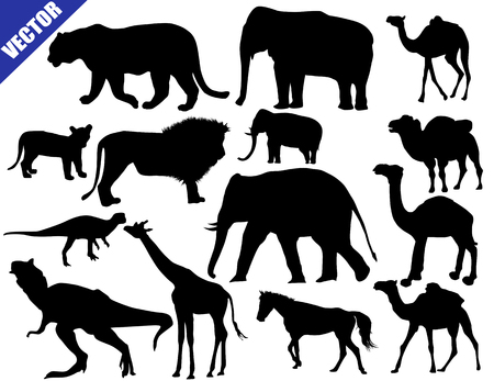 Zoo animals collection on white background, vector illustration Vector
