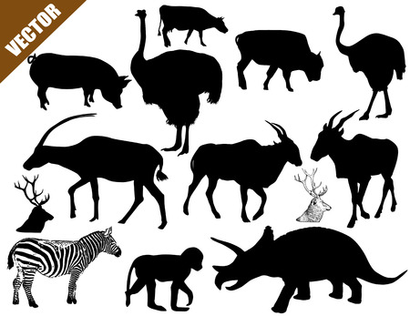 Set of animals collection on white background, vector illustration Vector