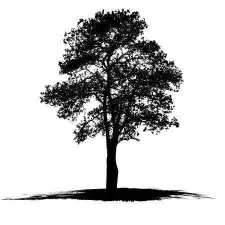 흰색 배경에 나무의 벡터 드로잉 일러스트