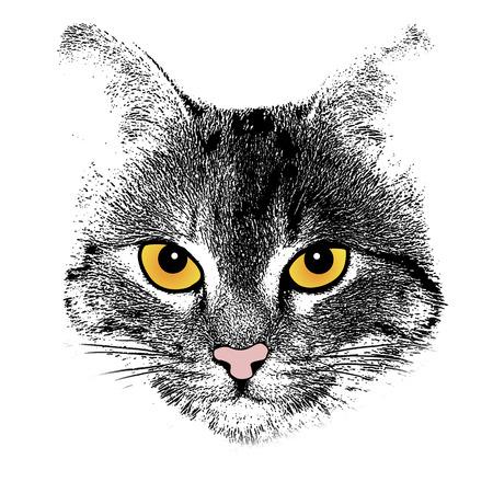 drawing an animal: Grunge background con un gatto tema volto stilizzato, illustrazione vettoriale