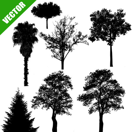Various drawing of the trees on white background, vector illustration
