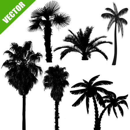 Set of palm tree silhouettes on white background, vector illustration