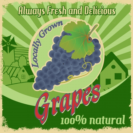 healty lifestyle: Vintage poster template for grapes farm, vector illustration