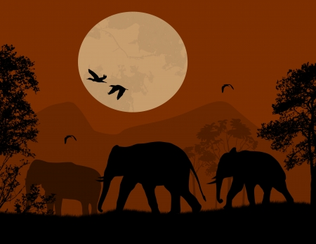 sunset painting: Wild elephants over red sunset, vector illustration
