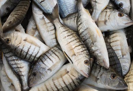 market place: Fresh fish on the market