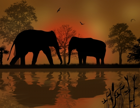 Elephants silhouette in africa near water at beautiful sunset Vector