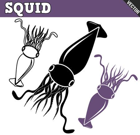 cuttlefish: Squid set on white background, vector illustration Illustration