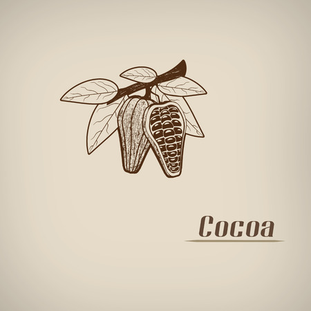 Cocoa in vintage style poster with cocoa beans symbol