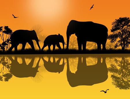 animales safari: Los elefantes en África silueta cerca del agua al atardecer hermoso
