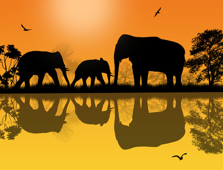 Elephants silhouette in africa near water at beautiful sunset